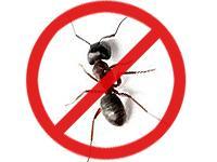 Balaji Pest Control Home, Furnishings & Garden sales India